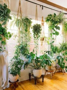 Fiddle leaf figs, pothos, snake plant or succulent: Whatever your green thumb prefers, there's no question that a houseplant adds a lively touch to interior style. Check out these ideas for working houseplants into your own home decor. Porch Plants, Window Plants, Hanging Plants, Plants Indoor, Indoor Gardening, Room With Plants, Plant Rooms, Bedroom Plants, Bedroom Decor