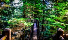 Constructed walkways on high tress made mainly from wood at Capilano park. Hiking Boots, Walkways, Park, Photography, Walking Boots, Fotografie, Driveways, Photography Business, Photo Shoot