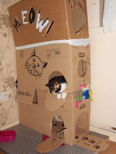 そこに段ボールがあるから入る猫たちの面白画像25