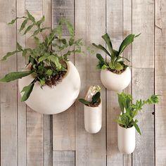 Shane Powers Ceramic Wall Planter, Small Circle