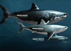 El megalodón | Gigantes prehistóricos - Taringa!