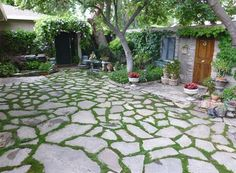 stone-with-grass-patio-design