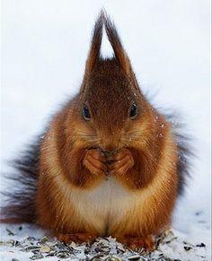 .squirrel | Eichhörnchen.