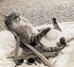 I'm at the beach, sunning myself~don't bother me!