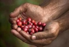 A type of coffee whose production is environmentally friendly and is humanitarian in its profit or gains, is organic coffee. Scroll below for a look at the top brands that solely produce such coffee. Cappuccino Coffee, Coffee Tin, Coffee Creamer, Black Coffee, Coffee Mugs, Organic Coffee Brands, Best Organic Coffee, Coffee Humor, Coffee Quotes