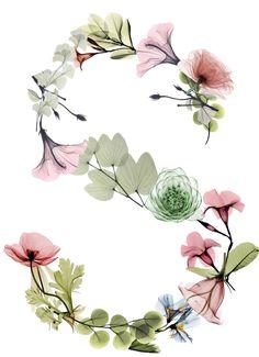 Alphabets Flower Letters, Flower Frame, Flower Art, Flower Wallpaper, Wallpaper Backgrounds, Iphone Wallpaper, Dont Touch My Phone Wallpapers, Cute Wallpapers, Watercolor Lettering