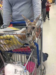 Just another trip to the grocery store..'