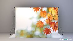 Leaves – Photography Backdrop
