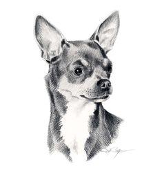 93d15ccb0b8b2 19 meilleures images du tableau Chihuahua