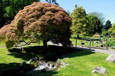 Il Giardino Roccioso, Parco del Valentino