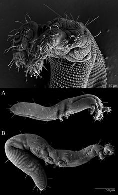 New dragon-like mite found in Ohio is gentle, reclusive Electron Microscope Images, Microscopic Photography, Micro Photography, Types Of Insects, Microscopic Images, Macro And Micro, New Dragon, Insect Art, Bizarre