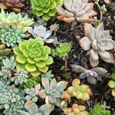 Succulents are super picky with their preference of soil they live in. Here's our fun step-by-step on how to make your own succulent soil at home! Succulent Potting Mix, Succulent Gardening, Succulent Care, Garden Soil, Container Gardening, Colorful Succulents, Growing Succulents, Small Succulents, Planting Succulents