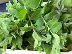 Spearmint- what Nora always says patch smells like.