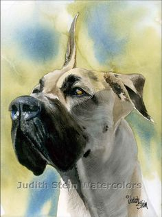 GREAT DANE Judith Stein
