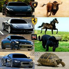 Which one Follow GTR Generation