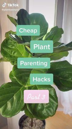 House Plants Decor, Plant Decor, Garden Plants, Indoor Plants, Indoor Garden, Cheap Plants, Household Plants, Inside Plants, House Plant Care