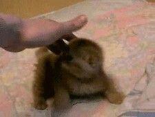 Kitty slap