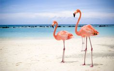 Miami Beach Flamingo 4K Wallpaper
