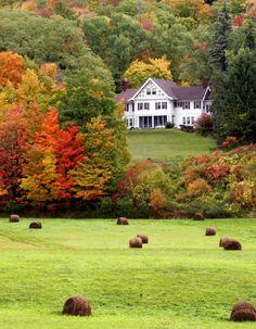 own a white farm house