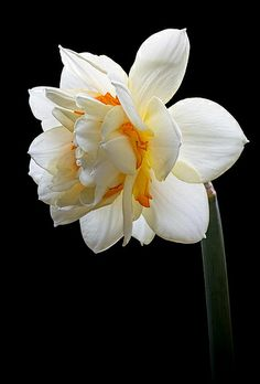 Double Delight by There and back again, via Flickr