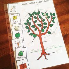 Přírodopis – části rostliny, stromu | Z Jiného světa