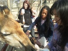 One day with South Africa giraffe!