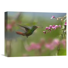 Global Gallery Rufous-Tailed Hummingbird Hovering Near Flower Ecuador Wall Art - GCS-396455-2432-142