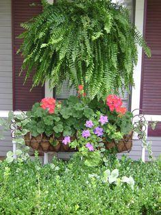 Grandma always loves hanging ferns on her porch each summer : )