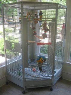 Training Your Pet Parrot Cockatiel Toys, Cockatiel Cage, Budgies, Parrots, Big Bird Cage, Bird Cages, Parrot Cages, Conure Cage, Macaw Cage