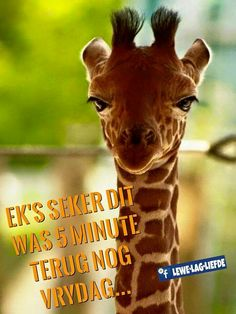 Afrikaanse Quotes, Good Night, Giraffe, Funny, Movie Posters, Text Posts, Tired Funny, Have A Good Night, Film Poster