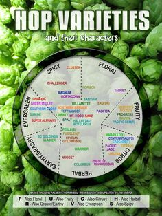 Hop Varieties and their characters. #hops #IPA #craftbeer