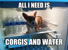 All I need is Corgis and Water