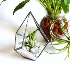 Stained glass terrarium
