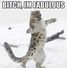 The fabulous snow leopard…