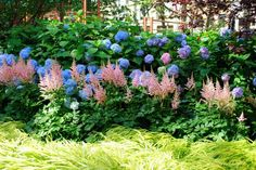 Astilbes in front of hydrangeas. For side yard fence
