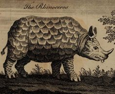 Rhinoceros, from J. Poundly & M. Andrew's The Wonders of Nature & Art. Engraving by Benjamin Cole, 1768.