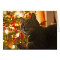 Tabby Cat Purr-fect Holiday Season Card - diy cyo customize create your own personalize