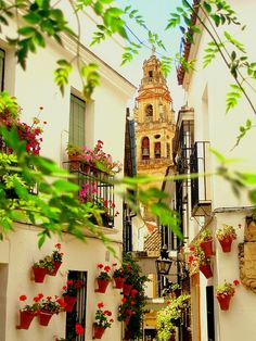 Córdoba, Spain........LOVE ALL THE FLOWER POTS OUTSIDE THE VARIOUS WINDOWS....SUCH A LOVELY SPLASH OF COLOR.......ccp