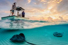 34 Incredible Underwater Photographs Reveal Nature at Its Best - BlazePress