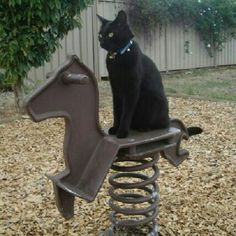 Cats : Furnella was disappointed that the horse in the playground only had one speed - STOP !