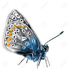 butterfly side wings sketch drawing spots realistic graphics shareasale illustrations vectors