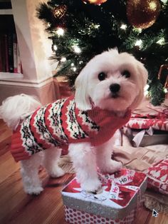 Did Santa bring me treats?