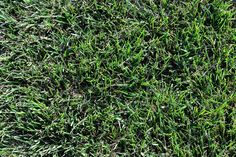 OUTSIDE THE FRAY – 9 Grass Textures