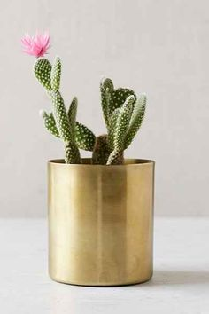 cactus in gold planter Gold Planter, Metal Planters, Planter Pots, Steel Planter, Planter Ideas, Indoor Garden, Indoor Plants, Cactus E Suculentas, How To Grow Cactus