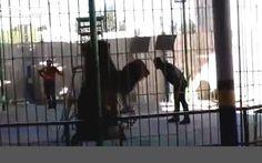 """""""O Grito do Bicho"""": Leão mata treinador em plena apresentação de circo..."""