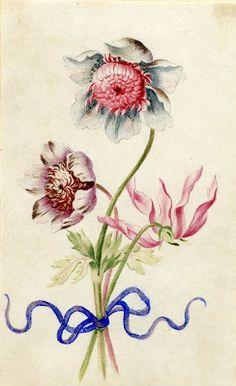 elle_belle | Alexander Marshall's botanical illustrations