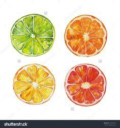 stock-photo-watercolor-citrus-slices-lemon-grapefruit-orange-lime-220156597.jpg (1500×1600)