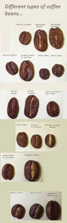 What are the different types of coffee beans #coffeebeans