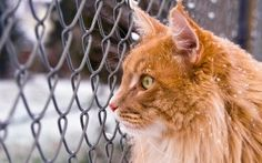 Preview wallpaper cat, muzzle, fluffy, net
