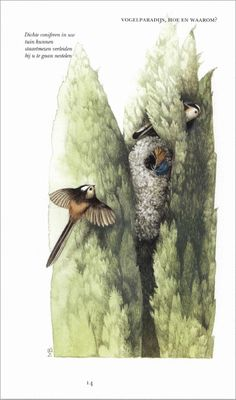 Marjolein Bastin, Nature Artists, Nature Paintings, Free Prints, Tropical, Bird, Spring, Garden, Artwork